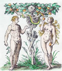 Woodcut by Jost Amman from Jacob Rueff, De conceptu et generatione hominis, Frankfurt, 1587_amcl_emb34