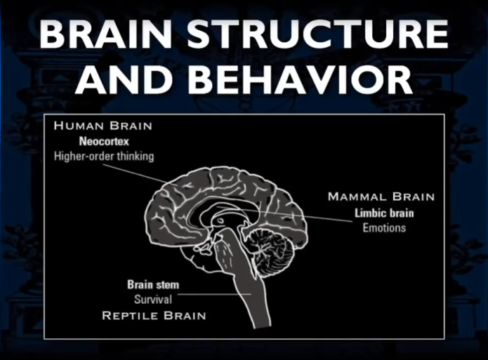 Brain structure and behaviour