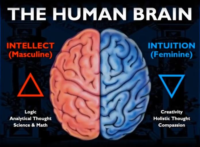 L-R M-F brain