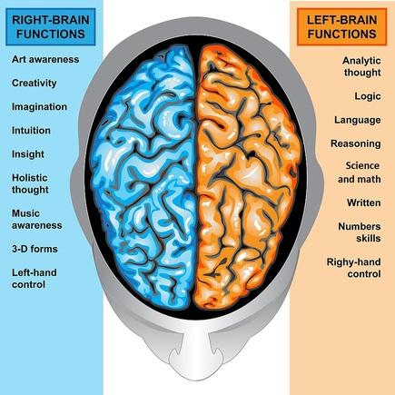 LR brain hemispheres