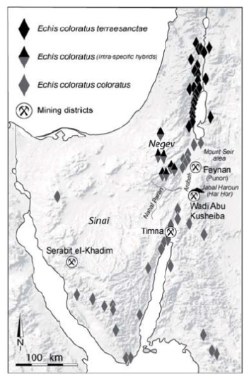 Geographic distribution of Echis coloratus in Canaan and Sinai.